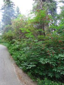 rowan path